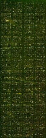 Example of MicroArray.