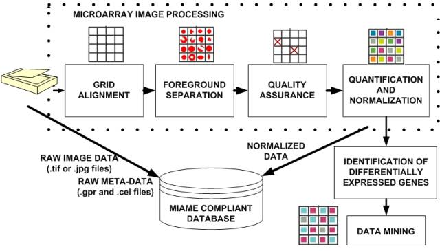 Microarray data processing workflow.